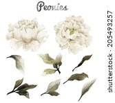Stock photo peonies and leaves watercolor can be used as greeting card invitation card for wedding birthday 205493257