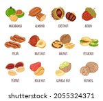 different nut isolated design... | Shutterstock .eps vector #2055324371