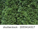 green background with branches... | Shutterstock . vector #2055414317