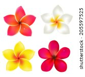 color frangipanis set  with... | Shutterstock .eps vector #205597525