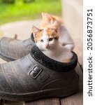 Small photo of Ginger kittens sit in old black galoshes, portrait, close-up, copy space