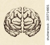 sketch illustration of human... | Shutterstock .eps vector #205714801