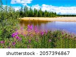 Small photo of Flowers on the river bank. River flowers on shore. Flower on river shore