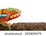 Picture Of A Chameleon On A...