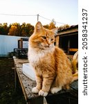 A Ginger Cat Sits On A Table In ...