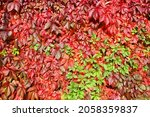 In Fall Climbing Vines Add A...