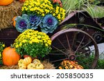 Autumn Decor.  Pumpkins  Squas...