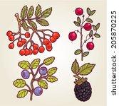 vector set of hand drawn wild... | Shutterstock .eps vector #205870225