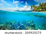 Coral Reef  Colorful Fish And...
