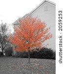 autumn colors | Shutterstock . vector #2059253