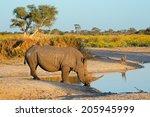 a white rhinoceros ... | Shutterstock . vector #205945999