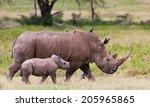 white rhinoceros or square... | Shutterstock . vector #205965865