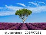 lavender field summer sunset... | Shutterstock . vector #205997251