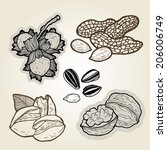 hand drawn illustration set of nuts.