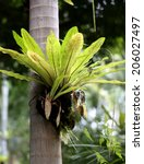 Bright Beautiful Epiphytic...