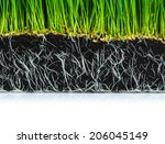Fresh Green Wheat Grass With...