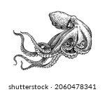 sea octopus. engraved hand... | Shutterstock .eps vector #2060478341