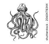 sea octopus. engraved hand... | Shutterstock .eps vector #2060478344