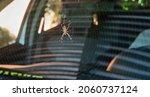Big Wasp Spider  Argiope...