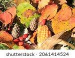 Colorful Autumn Leaves  Corncob ...