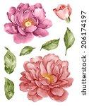 watercolor illustration flower... | Shutterstock . vector #206174197
