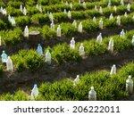 vegetable beds with plastic... | Shutterstock . vector #206222011