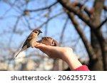 Feeding Little Sparrow By Hand