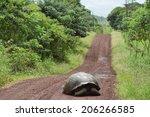 Giant Galapagos Tortoise...