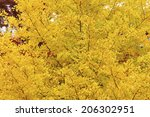 an image of ginkgo tree | Shutterstock . vector #206302951