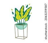 dieffenbachia houseplant in a... | Shutterstock .eps vector #2063259587