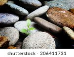 Young Plant Growing  New Life
