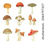 wild forest edible and... | Shutterstock .eps vector #2064797327