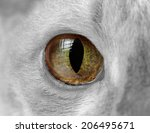 Cat Eye Close Up