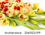 Colorful fresh red and yellow gladiolus isolated on white \ horizontal - stock photo