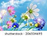 Daisy Flowers On Blue Sky...