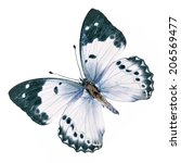 Beautiful White Butterfly...