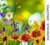 beautiful flowers in the garden ... | Shutterstock . vector #206625901