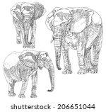 set of hand drawn elephants. | Shutterstock .eps vector #206651044