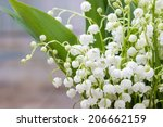 Bouquet Of Lily Of The Valley...