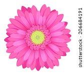 Colorful Gerbera Flower Head  ...