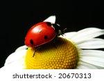 summer ladybug - stock photo