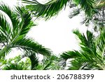palm tree on a white background | Shutterstock . vector #206788399
