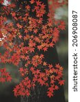 an image of autumn leaves | Shutterstock . vector #206908087