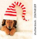 Longhair Dachshund Puppy Aslee...