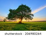 Lonely Tree And Sunset In The...