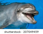 A Dolphin Looking Up At Its...