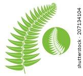 fern. isolated leaf on white... | Shutterstock .eps vector #207134104