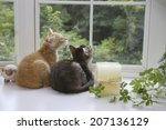 Two Kittens Watching Outside B...