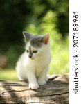 Stock photo gray small kitten sitting on the tree branch 207189961