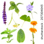 collage of healing herbs ... | Shutterstock . vector #207304045